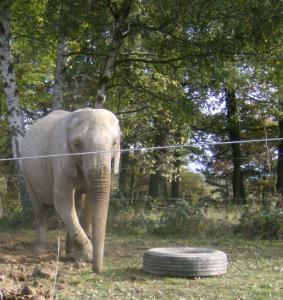 Haltung des Zirkuselefanten Mausi