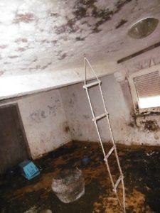 Durch Urin und Kot verschimmelte Wohnung mit Katzenhaltung