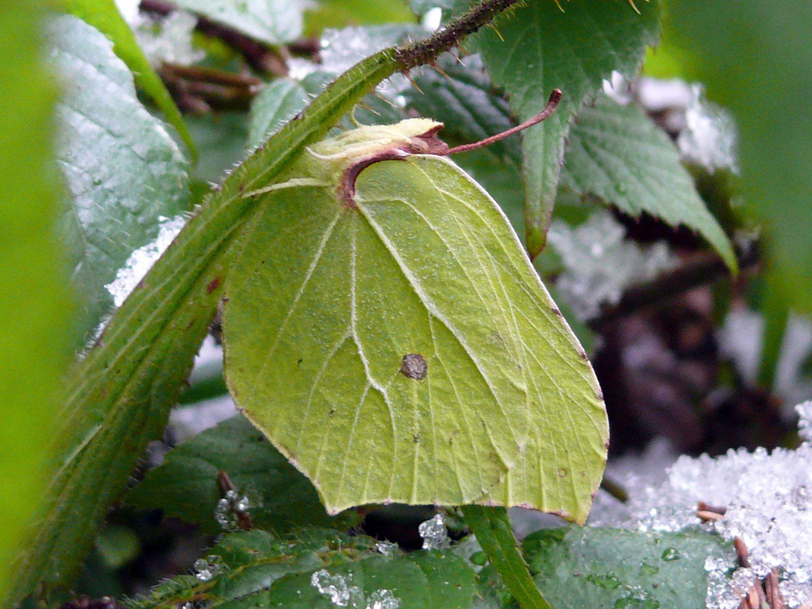 Schmetterlinge im Winter vor der Wärmefalle retten