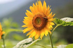 Bad Nauheim schreibt erneut den Umweltpreis aus. (Foto: Pixabay)
