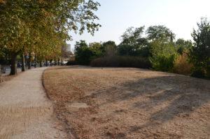 Entlang der Ludwigstraße plant die Stadt Wohnbebauung. 2020 soll ein Bürgerentscheid klären, ob die Einwohner damit einverstanden sind. (Foto: Petra Ihm-Fahle)