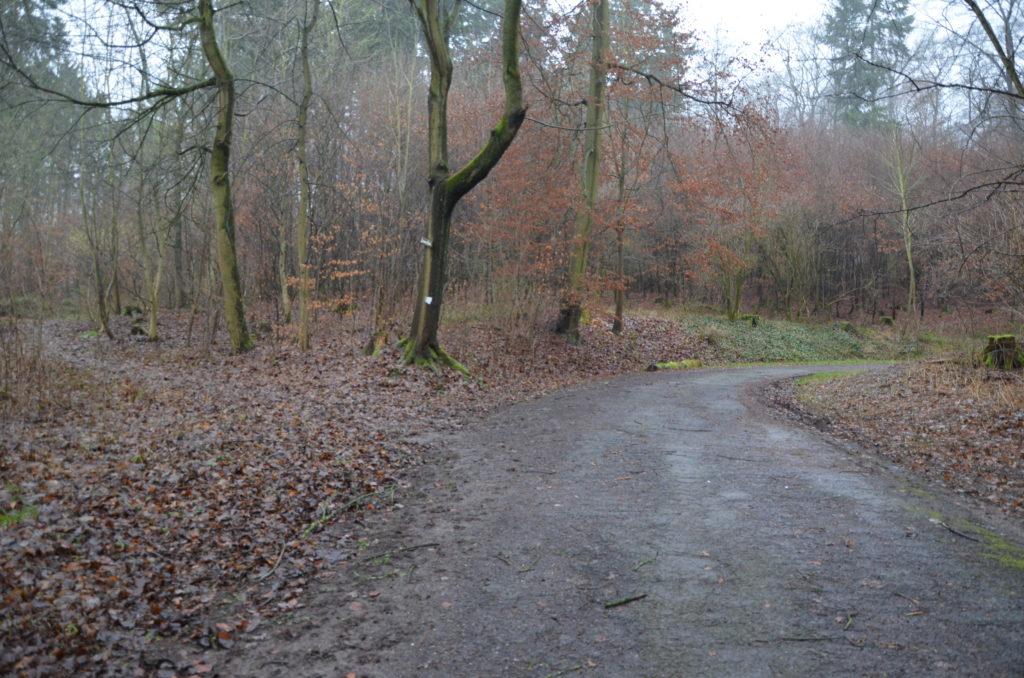 Zu einem Rundgang durch den Bad Nauheimer Wald lädt Bürgermeister Kreß alle interessierten Bürger ein. (Bild: Petra Ihm-Fahle)