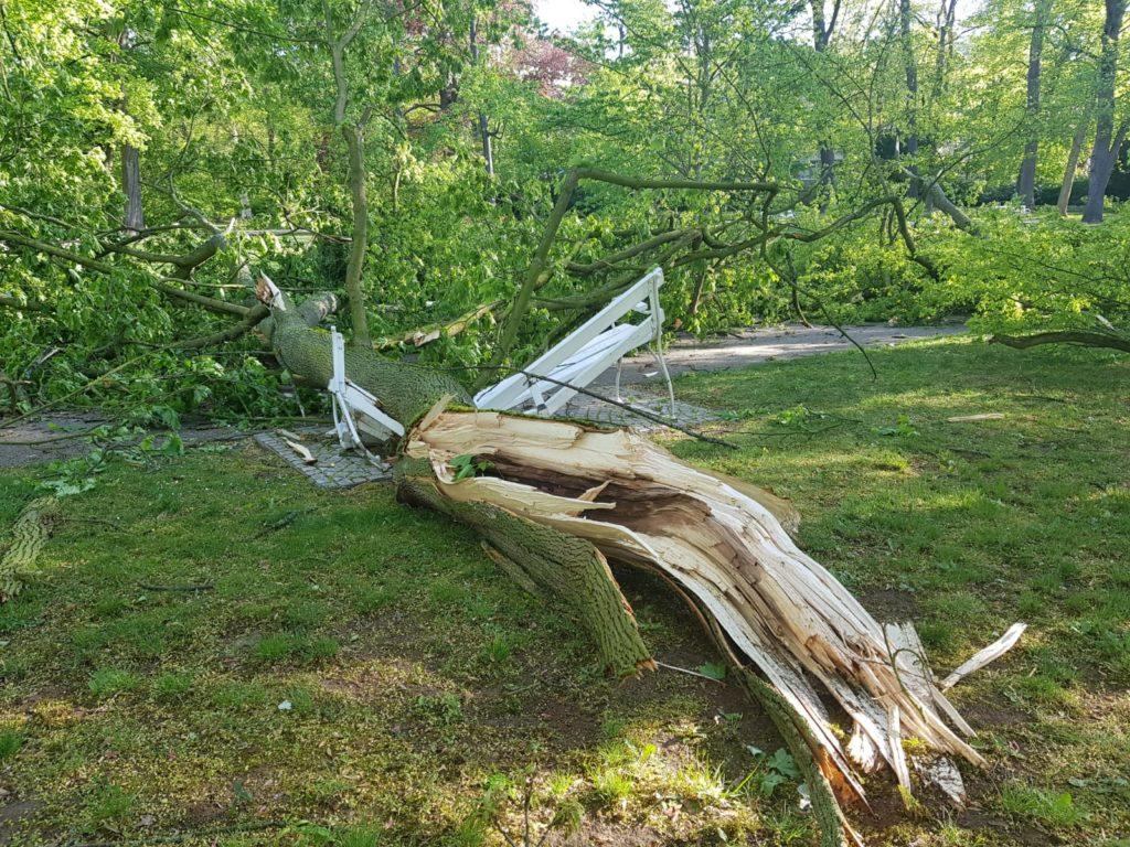 Wie Streichhölzer knicken Bäume durch den Sturm um. (Bild: Stadt Bad Nauheim)
