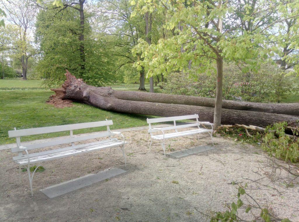 Die Schäden durch den Sturm sind groß. (Bild: Stadt Bad Nauheim)