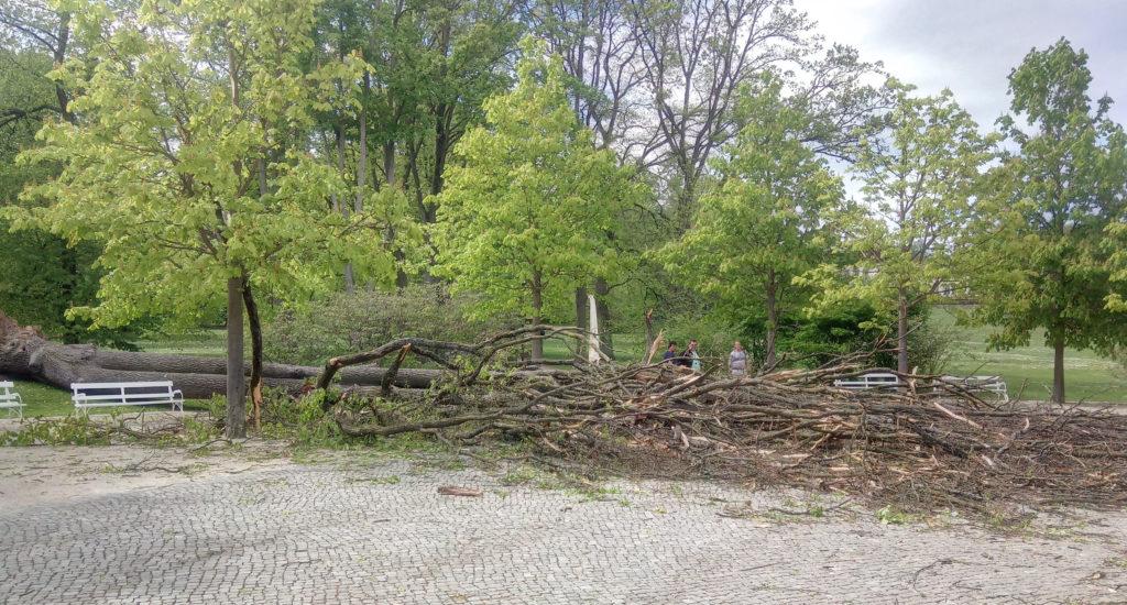 Der Sturm entwurzelte einen großen Baum am Kastanienrondell. (Bild: Stadt Bad Nauheim)