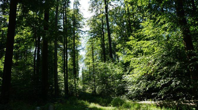 Trockenheit im Wald